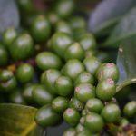 coffee roasters bury st edmunds suffolk