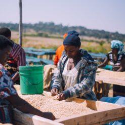 Tanzania Hasambo